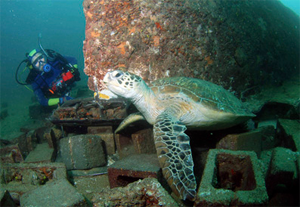 Artificial-Reef-5-AU-Flickr