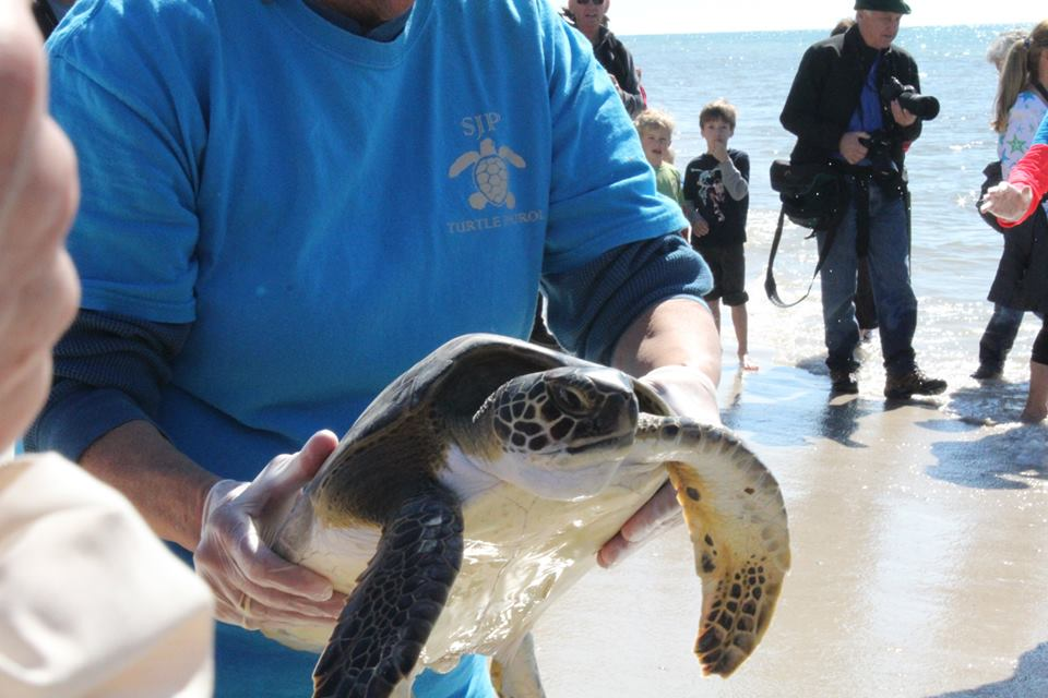Cape San Blas Turtle Rescue